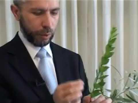 הרהג הרב זמיר כהן שליטא   ארבעת המינים   סוכות   הסברים וכיצד אוגדים