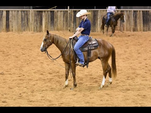 UNO ROCKIN - 2013 Sorrel Gelding by Rockin W in training with Jesse Lennox