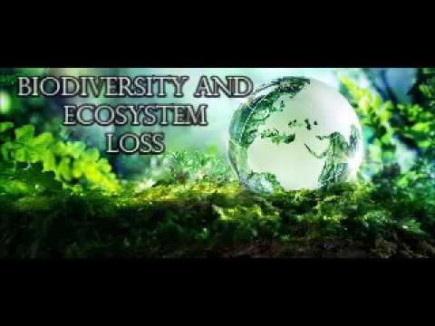 Biodiversity and Ecosystem Loss