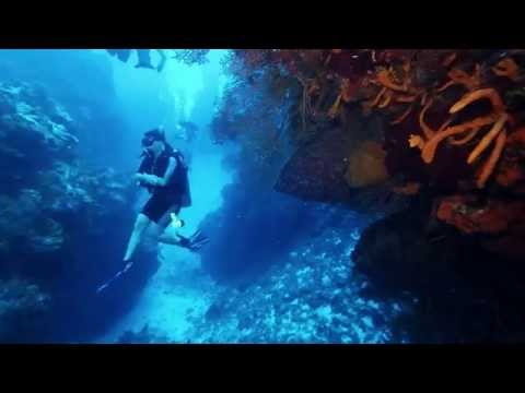 Best Scuba Diving in the World, Cozumel, Mexico: Palancar Gardens Wall (HD - 1080p)