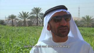 Conserving water on Al Ain Farms- by Al Remah School