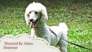 World Class Dog Kennels, Dog Boarding, Mchenry, Il.
