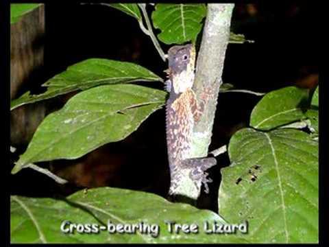 Thailand, Khao Sok National Park Reptiles