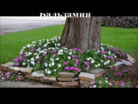 Цветы под деревьями Какие садовые цветы сажают под деревом