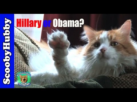 Hillary or Obama? -- Cat Clips #5