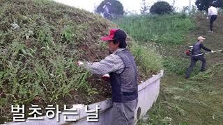 하늘보좌축복TV 제18편 한국 조상묘 벌초하는 날