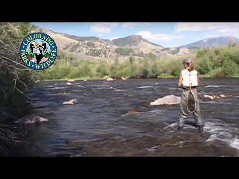 Fly Fishing Colorado - July - Summer Caddis - Yampa River