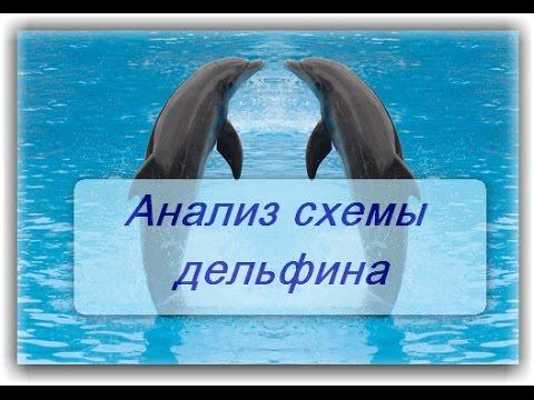 Анализ схемы дельфина.