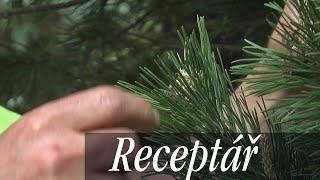 Udržování a zakracování jehličnatých stromů, úprava jejich tvaru