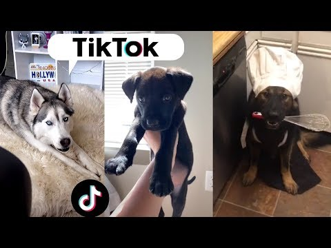 Dogs being... DOGS ~ Funny TIKTOK Compilation