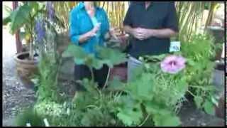 Hughes Bog Plants