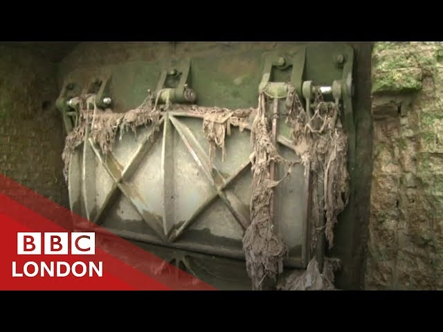 Antibiotic-resistant bacteria found in the River Thames - BBC London