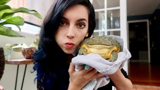 Feeding My Pet Giant Bullfrog