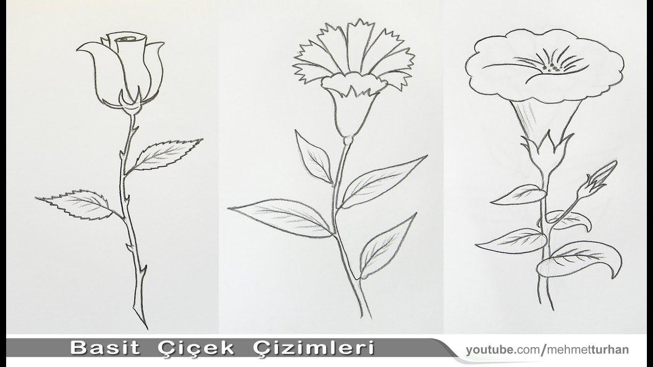Kolay Gül Karanfil Gündüz Sefası çiçeği çizimi How To Draw Easy