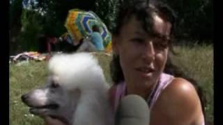 Выставка собак в Донецке