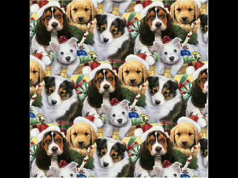 ISLAND PUPPIES PRE HOLIDAY SPECIAL $500 OFF