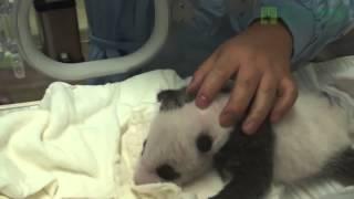 Baby panda and baby giraffe    2 Done