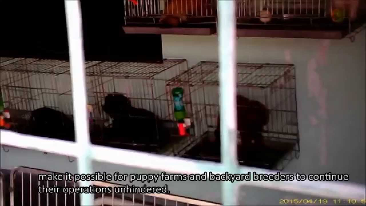 the truth about singapore u0027s pet industry youtube