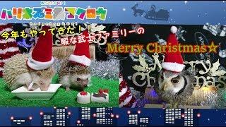 Merry Christmas!! 動画をご覧いただきありがとうございます! 遂にや...