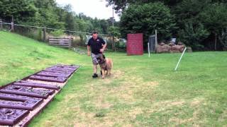 Newbury Lodge Dog Training - Conan Heel Work