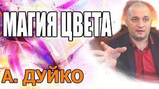 Андрей Андреевич Дуйко Официальный Сайт