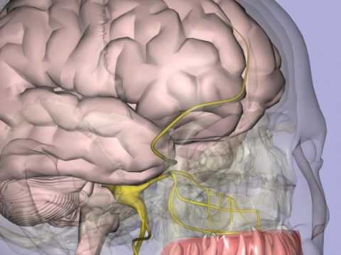 trigeminal nerve.mp4