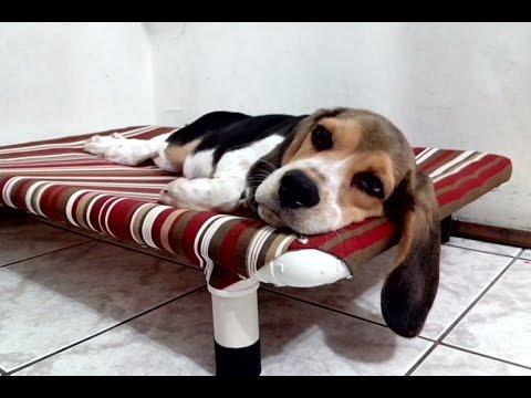 Cama PVC PET Cachorro & Gato - Veja como fazer com baixo custo, resistente, higiênica...