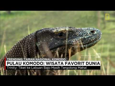 Pulau Komodo Wisata Terfavorit di Dunia - Trinity, Travel Blogger