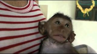 MONKEY CLEANING.mp4