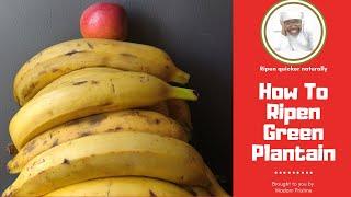 How to Ripen Gręen Plantains