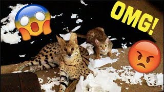 MY Cats DESTROYED My HOUSE! Funny Video!