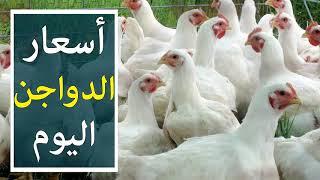 اسعار الدواجن اليوم الاحد 14-10-2018 في بورصة الدواجن في مصر