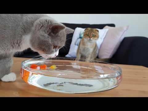 BALIK AVLAMA (Kedimiz Oyuncak Balıkla Oynadı)