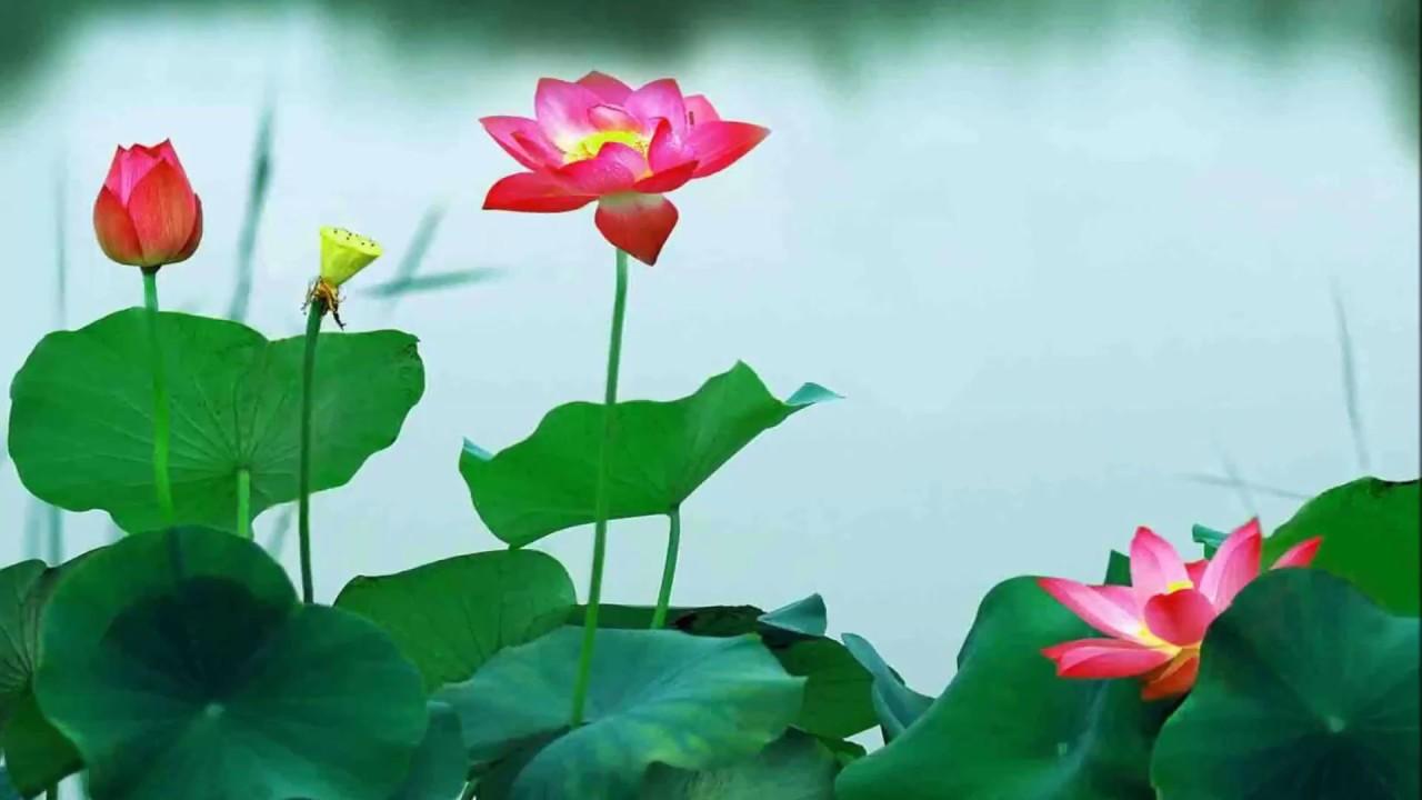 TUYỂN TẬP NHỮNG BÀI THƠ HAY VỀ CHA MẸ-Nghệ sĩ ngâm thơ Ngọc Sang diễn ngâm