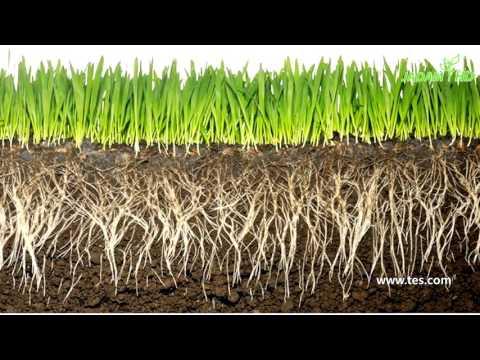 4. 토양관리, 인접산 부엽토처럼(Jadam  Organic Farming)