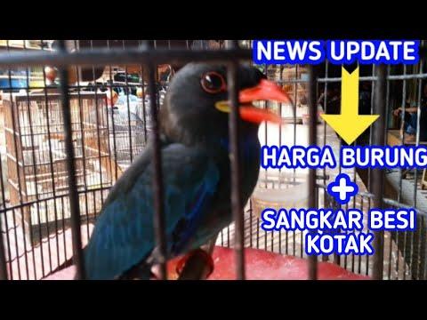 New Update, harga burung & sangkar kotak besi