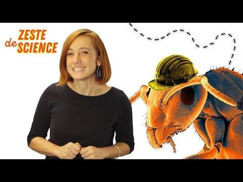 une-fourmilière-virtuelle---zds#7