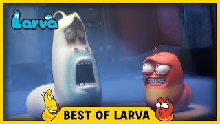 LARVA | BEST OF LARVA | Funny Cartoons for Kids | Cartoons For Children | LARVA 2017 WEEK 28