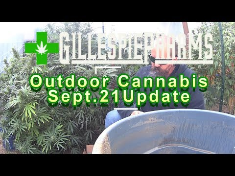 Growing Cannabis Outdoor Sep 21 Update; Bloom Recipe & Garden Walk-through