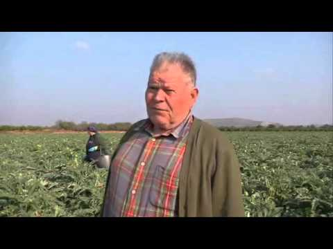 9713 economics agriculture HR Valencia   Das Land, wo die Orangen blühen 11 10