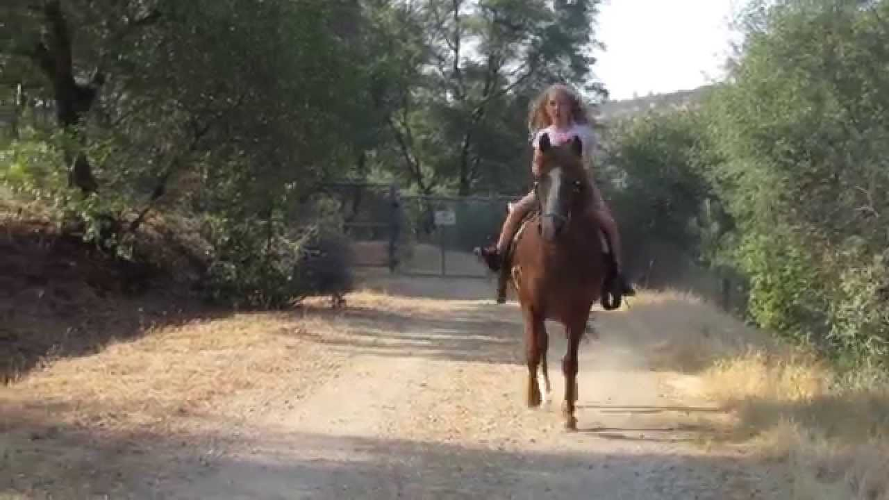 2015 Mustang For Sale >> Mustang horse for sale - YouTube