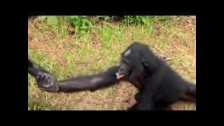 Любовь и мир животных