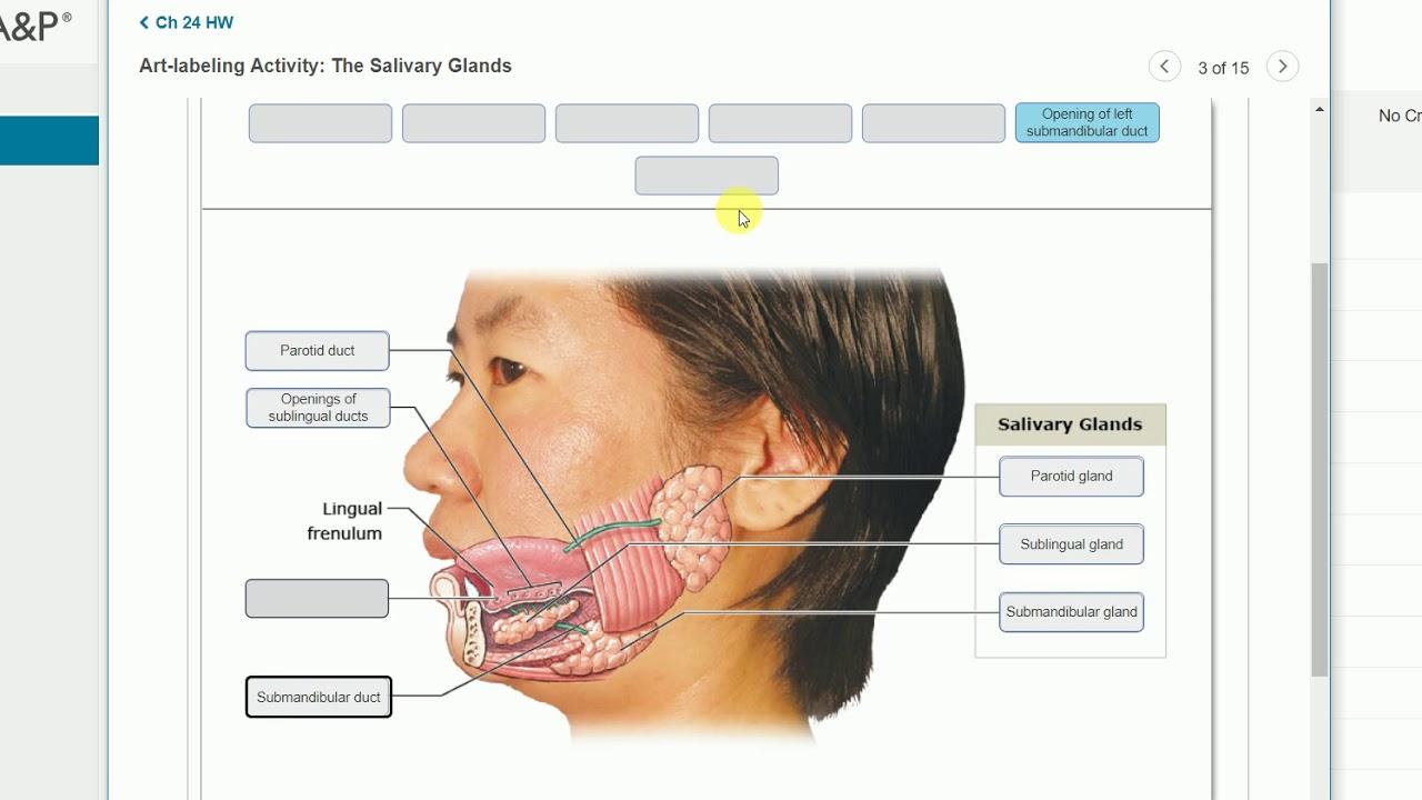 Anatomy - Digestive System Practice Problems