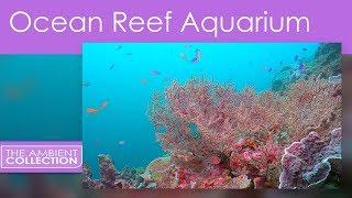 Tropical Reef Aquarium And Ocean Underwater Scenery All In 1080p