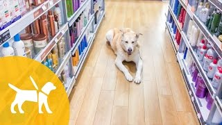 WORKING A SERVICE DOG NAKED! | ThePfledPfam