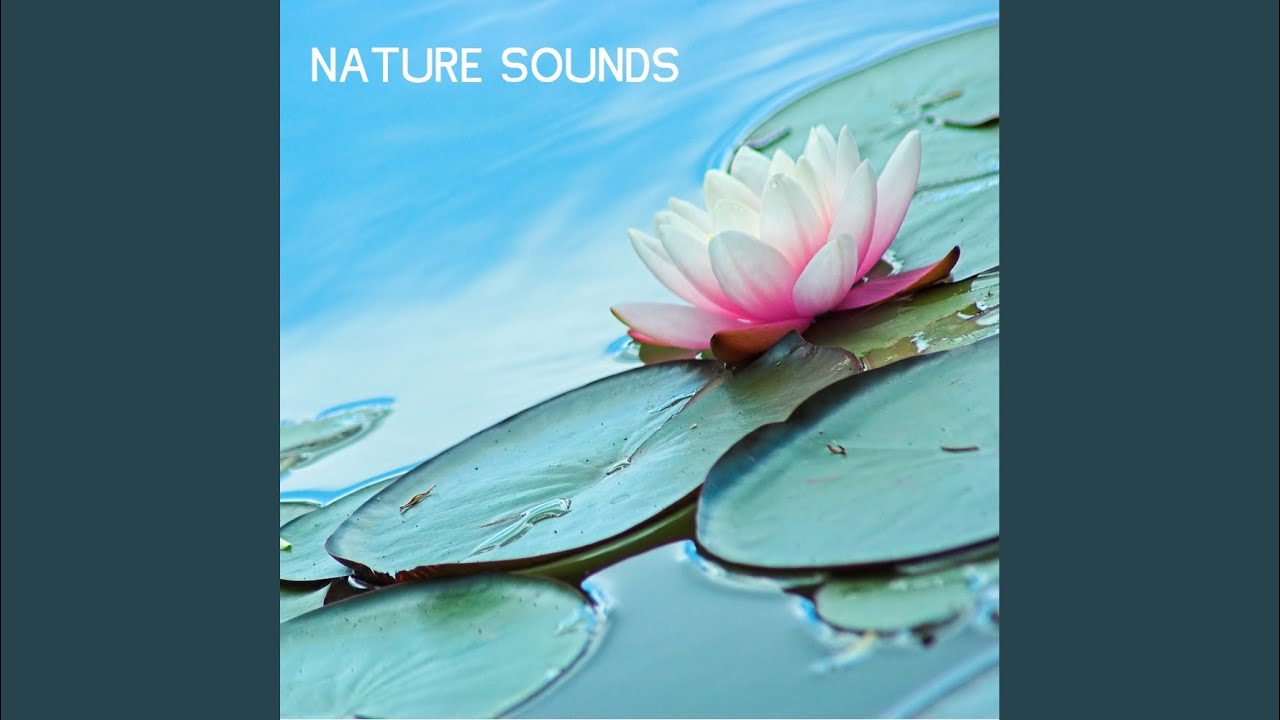 Bird Sounds - Free Birds Singing Relaxing Spa Music Bird Sounds