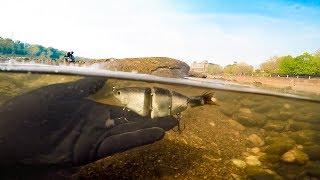 River Treasure: Found $150 Swimbaits & Pellet Gun!! (Ft. Dallmyd)