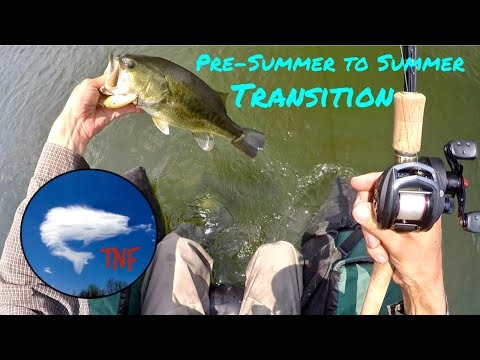Pre-Summer to Summer Transition: Crankbaits for Bass Fishing