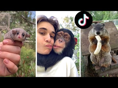 Funny Animals of TikTok ~ Compilation of Cutest Animals on TIK TOK