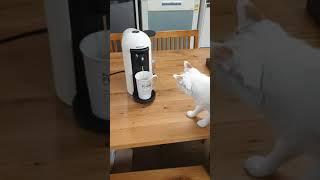 커피머신 구경하는 마루랑 고미